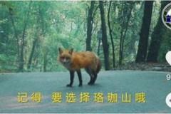 招生出奇招 武漢大學找狐狸代言