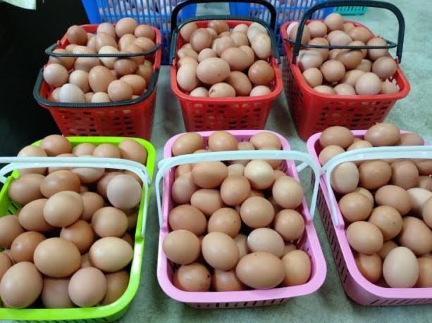 謝樟樹雞蛋廠以雞蛋友善系統飼養母雞,讓母雞在天然、安心的環境下產生雞蛋,堅持給消...