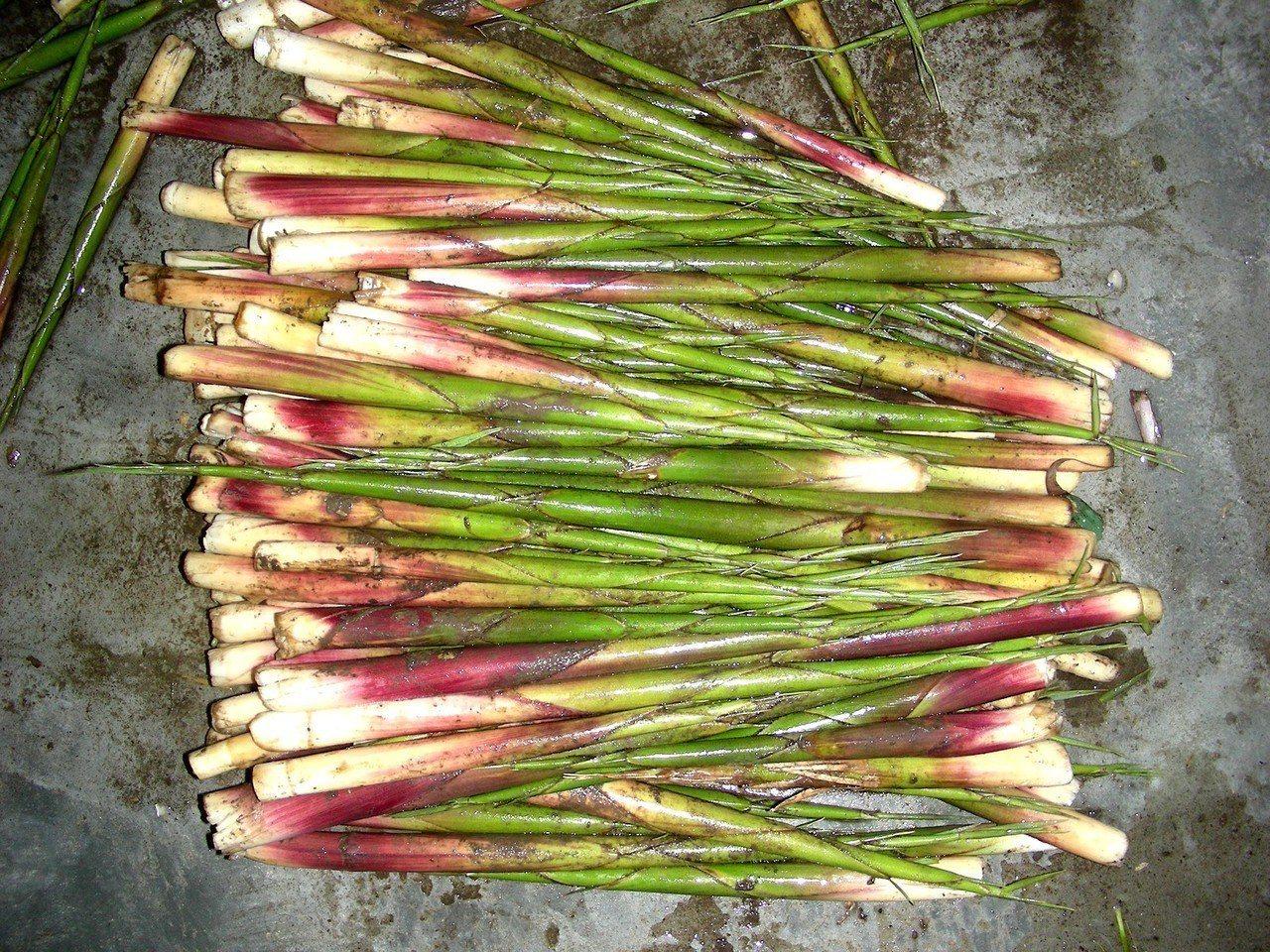 箭竹筍。圖/台北市立動物園提供