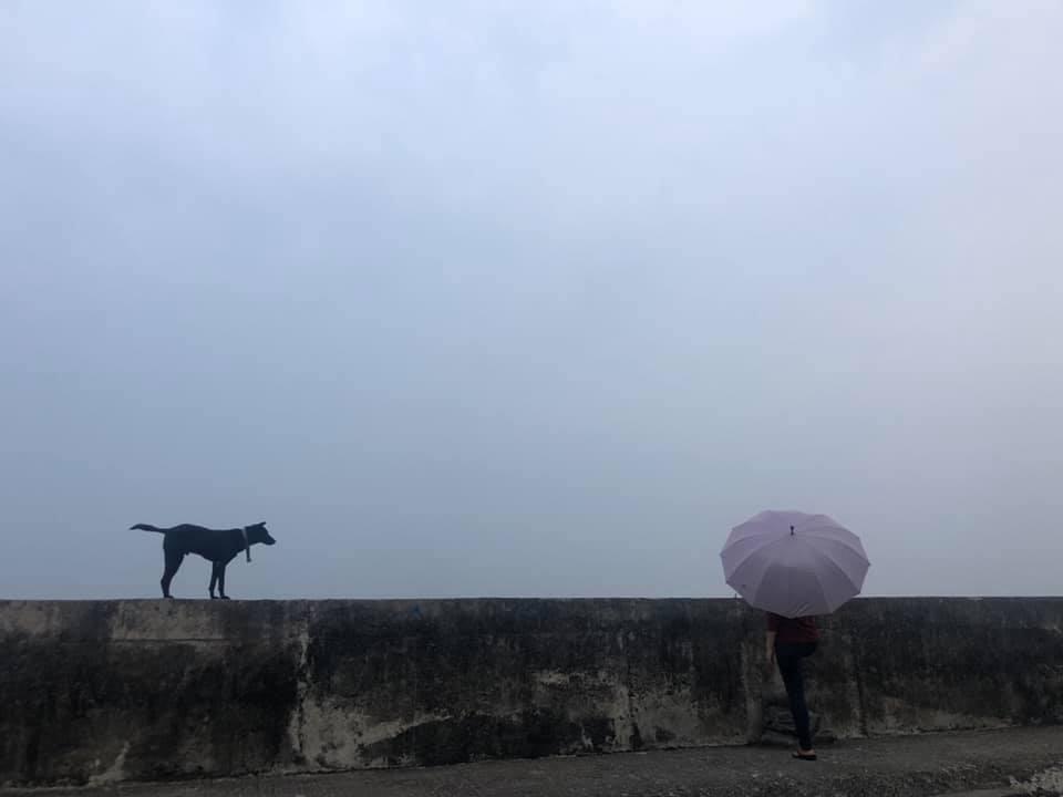 龍應台「腳過枋寮」,並且在臉書上po出堤防上一隻狗與撐傘人的照片,引發網友不同解...