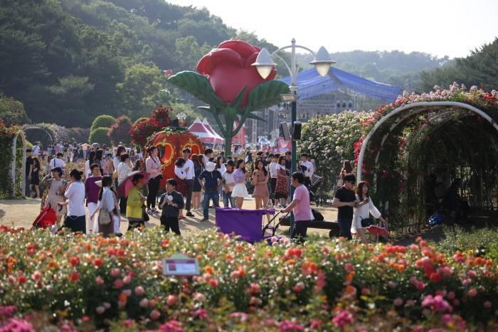 民眾在展場內,可欣賞到約6萬株玫瑰盛開的場景。圖/擷取自韓國觀光公社官網