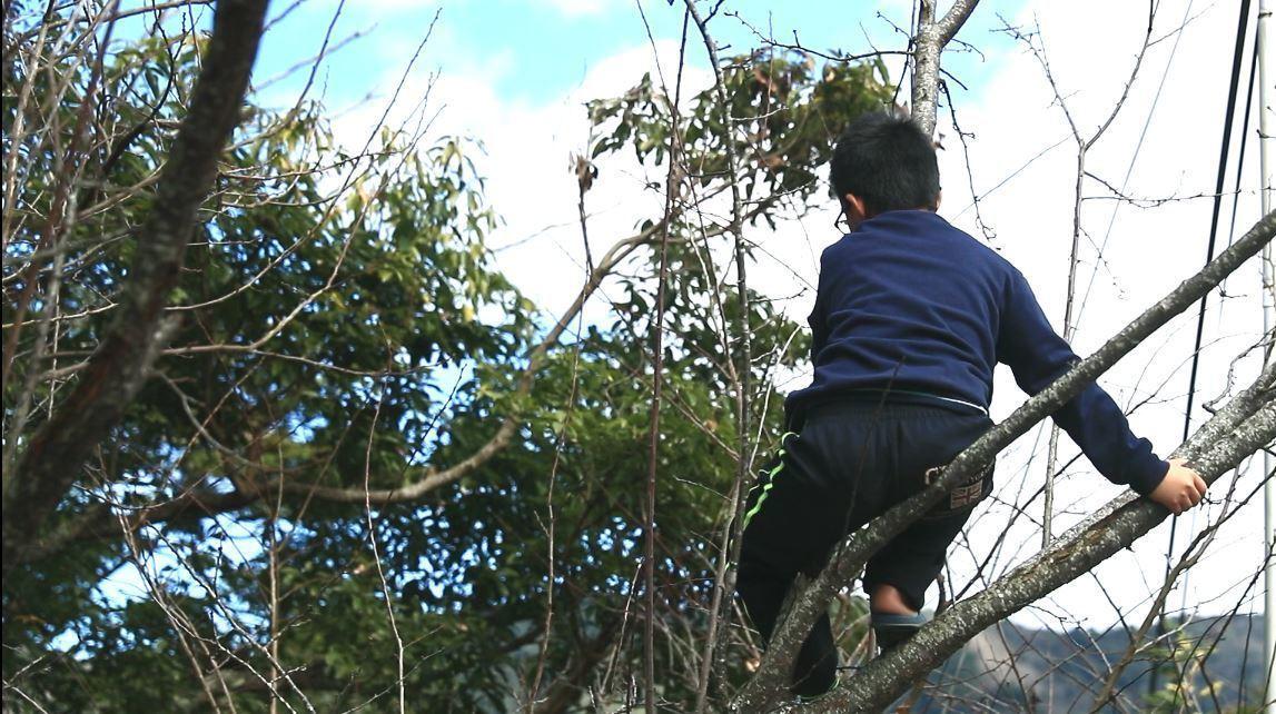 「小各」對山下生活充滿無限想像,總爬上樹眺望山頭遙想外頭的繁華絢麗。本報...