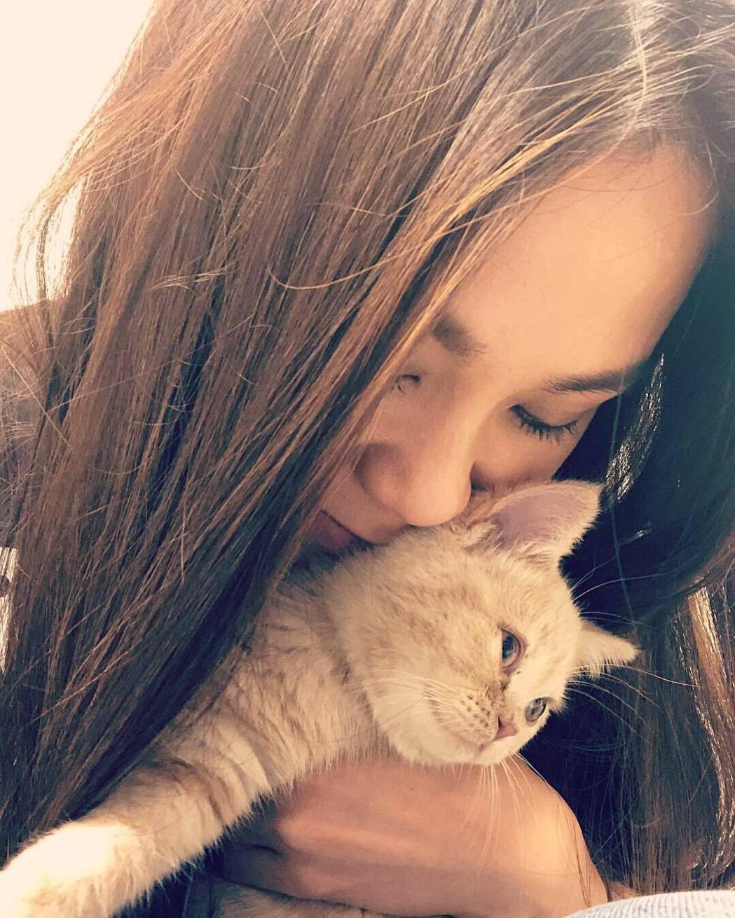 蔡健雅近日升格當「貓媽」。圖/摘自IG