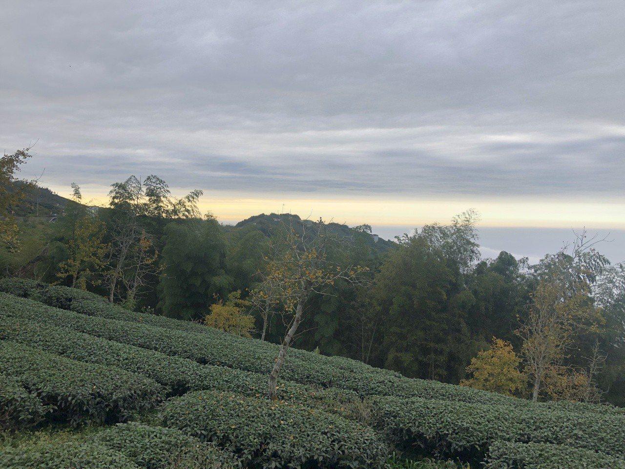 南投縣高山茶、烏龍茶聞名,茶葉採收季節需要大量人力,缺工問題嚴重,希望農委會也趕...
