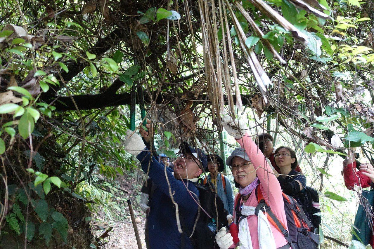 苗栗社大古道志工培訓第三期學員們今到紙湖古道,修剪古道旁的樹枝。記者劉星君/攝影