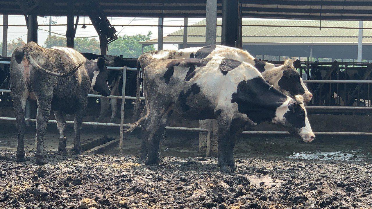 農委會主委陳吉仲昨天在台南柳營酪農專業區,宣布「農業外勞」7月正式上工, 針對缺...