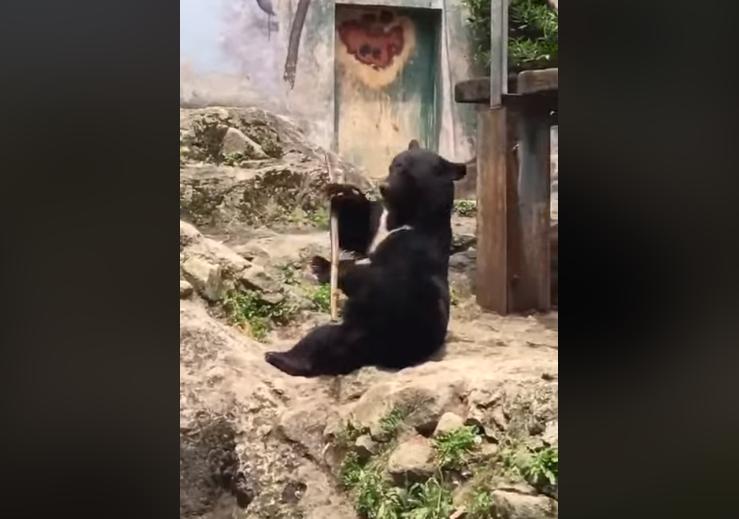 把玩木棍的黑熊被網友稱為「功夫黑熊」。圖擷自Facebook