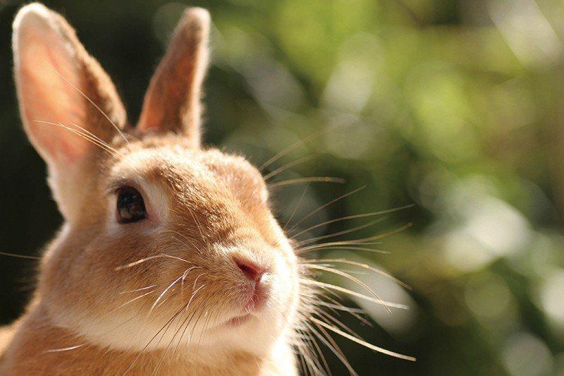 在加賀溫泉鄉泡湯後不妨到遠離塵囂的月兔村,欣賞兔子與四季美景。