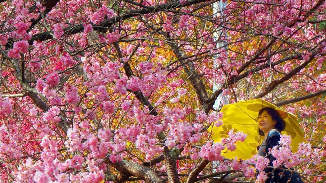 觀光局今公開春遊補助各縣市剩餘額度。 本報資料照片
