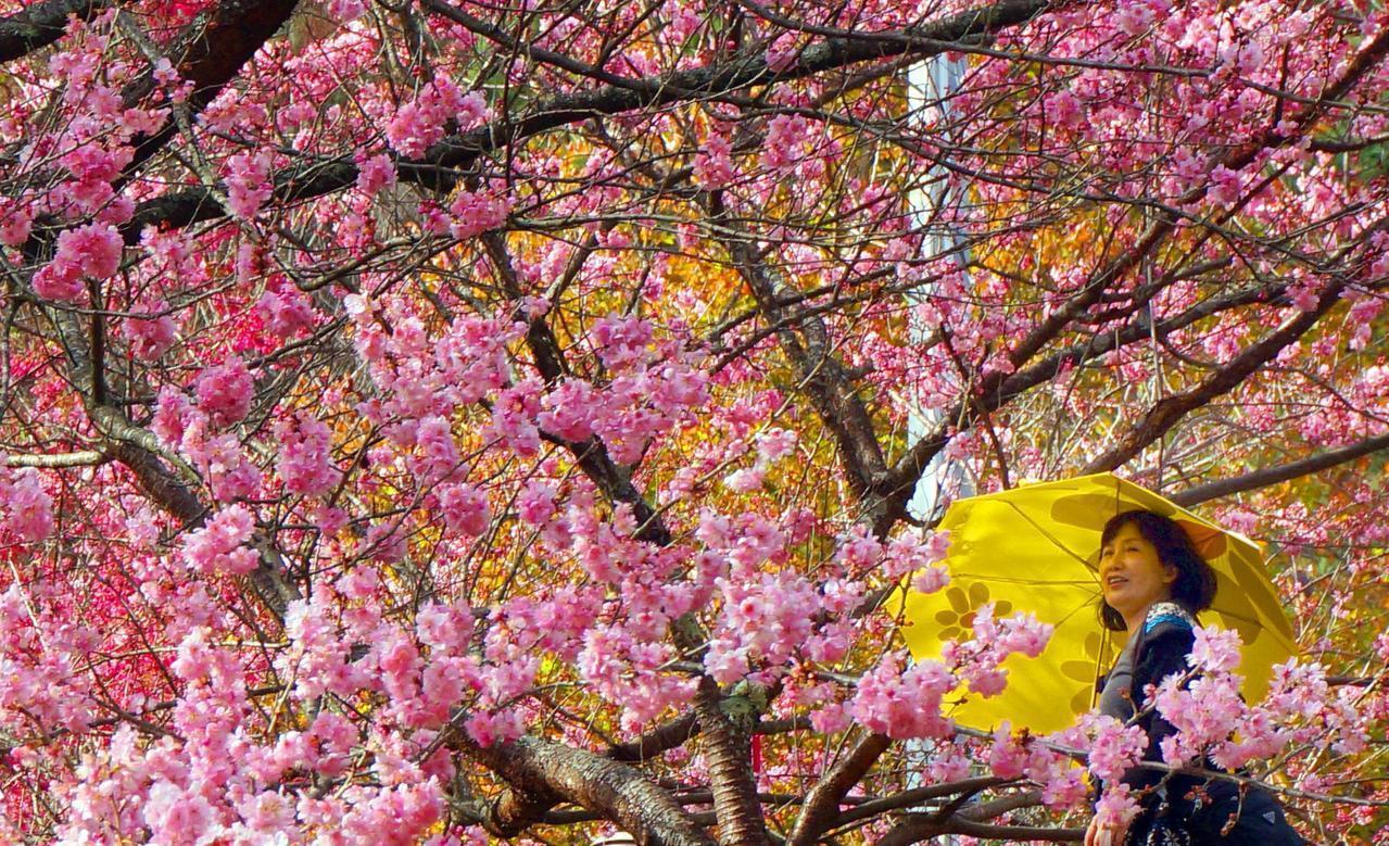 觀光局今公開春遊補助各縣市剩餘額度。本報資料照片