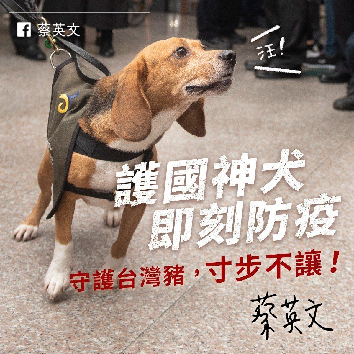 蔡英文總統在臉書張貼「護國神犬」米格魯檢疫犬的照片。圖/擷取自蔡英文臉書