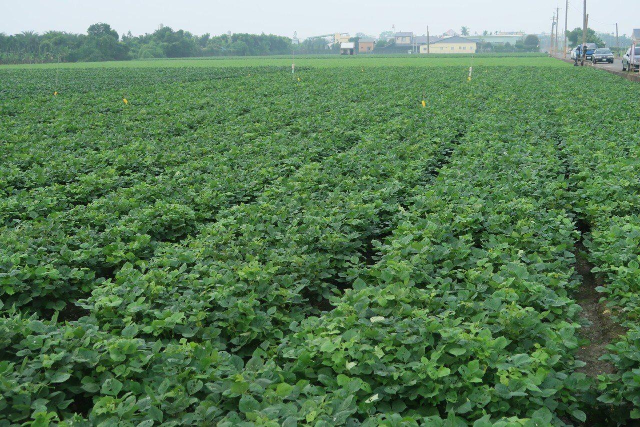 屏東縣是農業縣,未來農地上的違章工廠要如何處理,受到農民的高度關切。圖/本報資料...