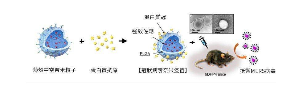 本研究發明的奈米疫苗,比照病毒,將抗原做成奈米大小,更模仿冠狀病毒表面的「皇冠樣...