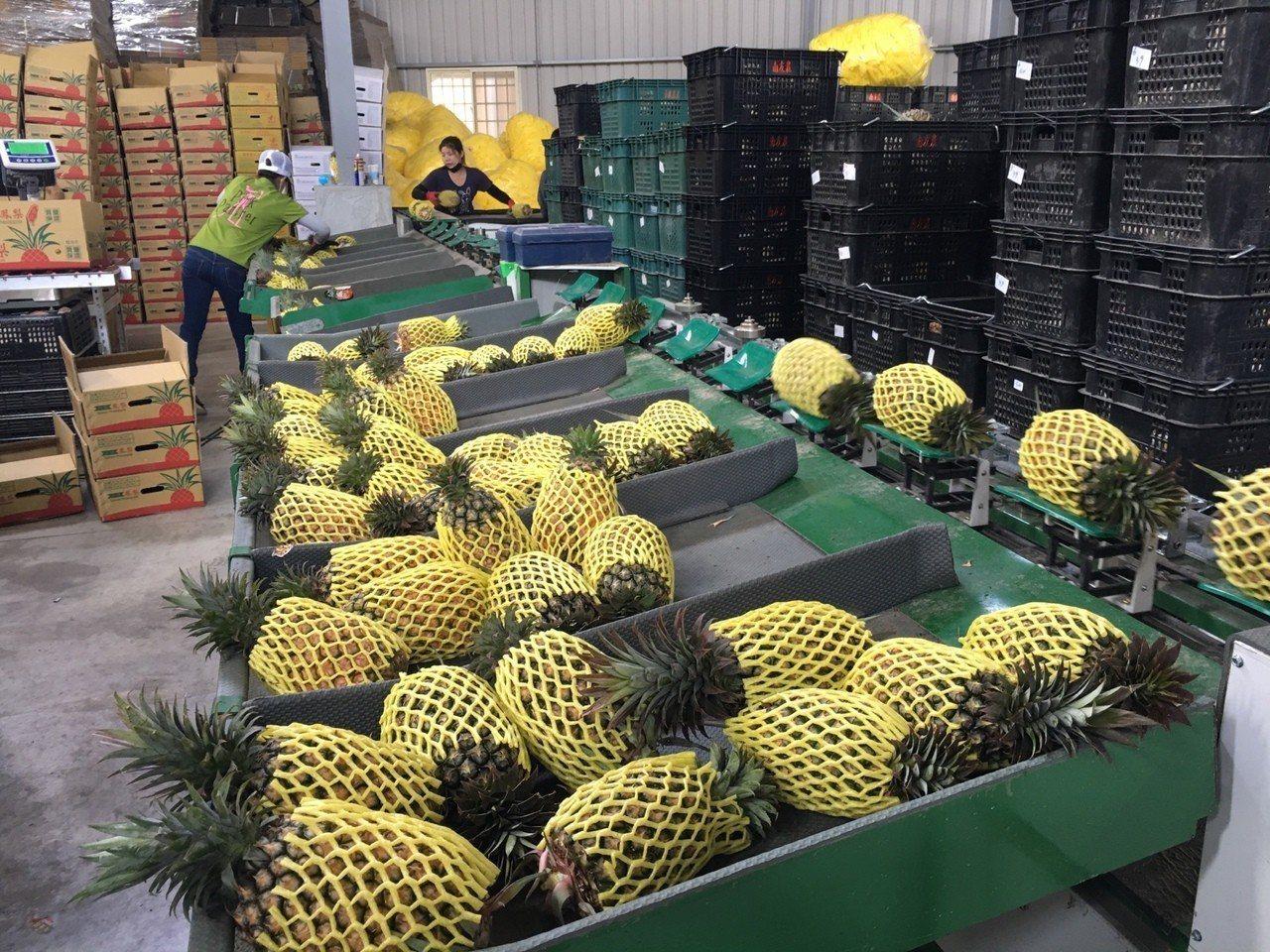 高雄出口最多的水果是鳳梨,達5306.7公噸,產值約為1億3415萬元。圖/高雄...