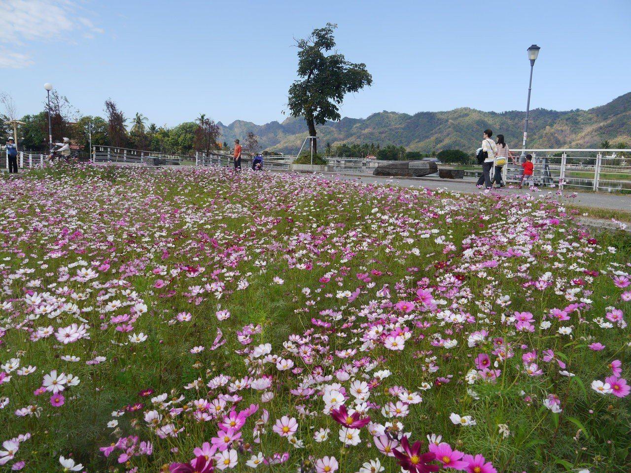 美濃是十大觀光小鎮,新春期間,美濃湖附近栽種大面積景觀花卉。圖/本報資料照