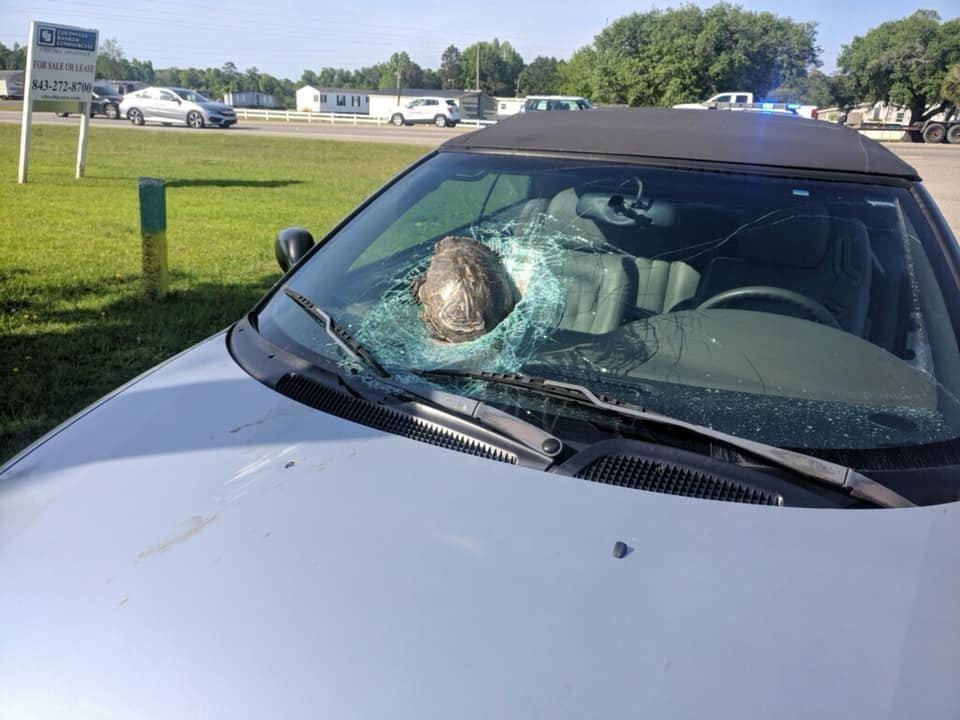 美國一名男子駕車上班時突然被「從天而降」的烏龜擊中車頭,擋風玻璃及引擎蓋都嚴重損...