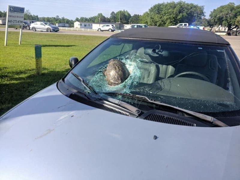 美國一名男子駕車上班時突然被「從天而降」的烏龜擊中車頭,擋風玻璃及引擎蓋都嚴重損毀。 圖片來源/FB「Sharon Vaught」