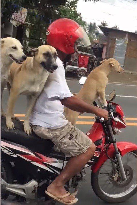 圖片來源/《Three Dogs Riding Motorcycle》YouTu...