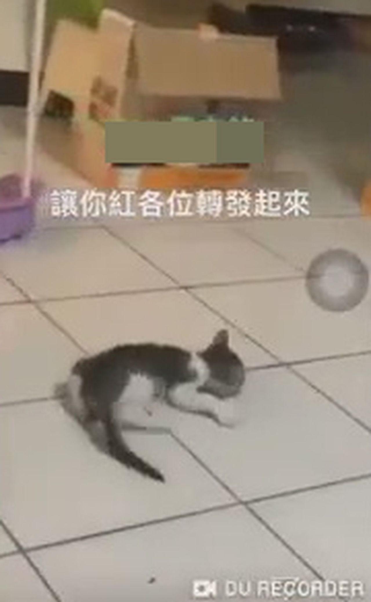 桃園市雷姓高職生,PO網空中甩搖晃幼貓,身體猛轉圈,讓小貓暈頭、身體癱軟無力的在...