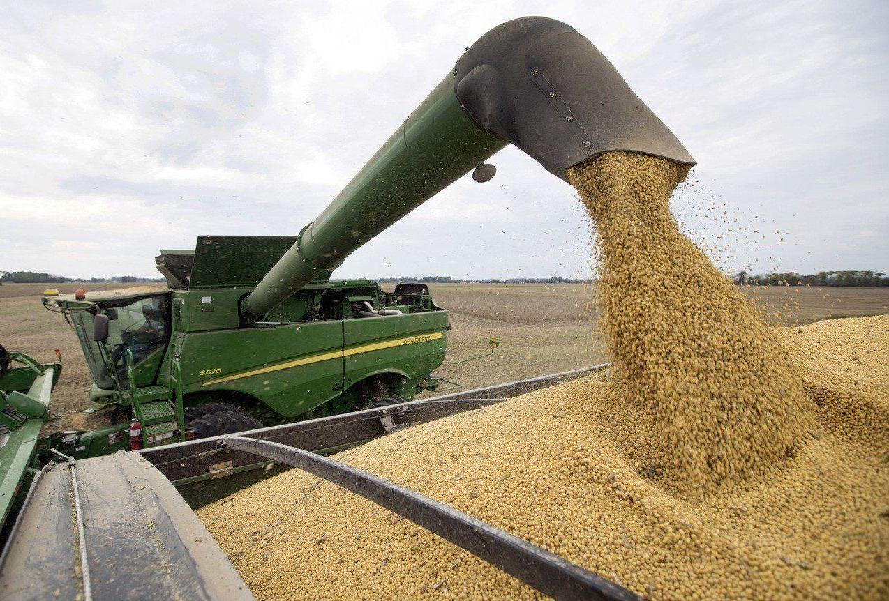 中共當局今年推出「黃豆振興計畫實施方案」,每畝大豆補貼人民幣340元。圖為美國黃...