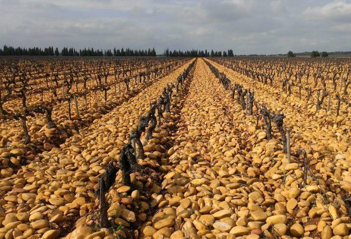 澳洲12年首度進口小麥。外媒分析,極端氣候會讓澳洲出口小麥受到影響,也會連帶到國...