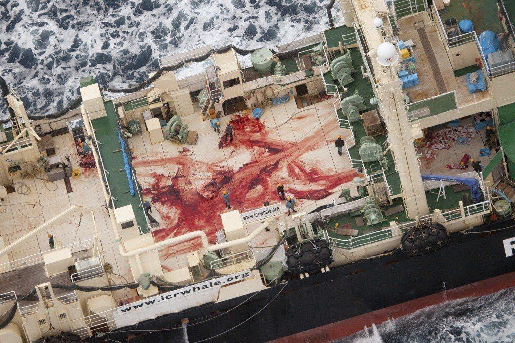 日本捕鯨船甲板作業畫面。 圖/路透社
