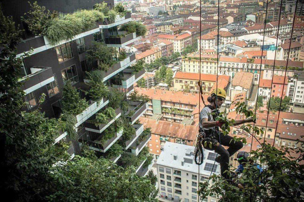 工人正在為各住戶安設樹木。 圖/取自網路