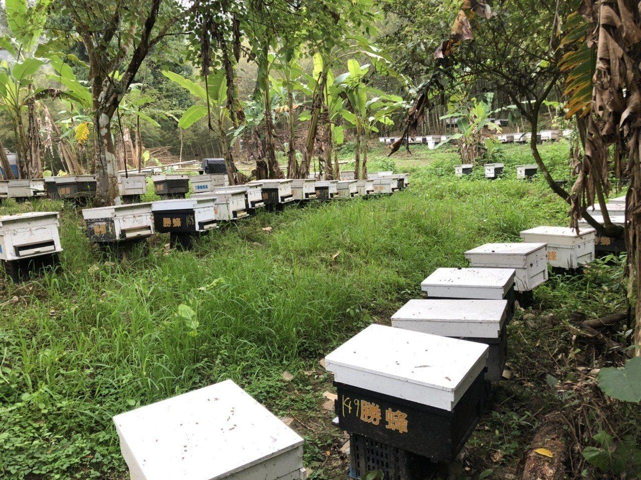 今年因暖冬無花,蜂農損失慘重。圖/台南市農業局提供