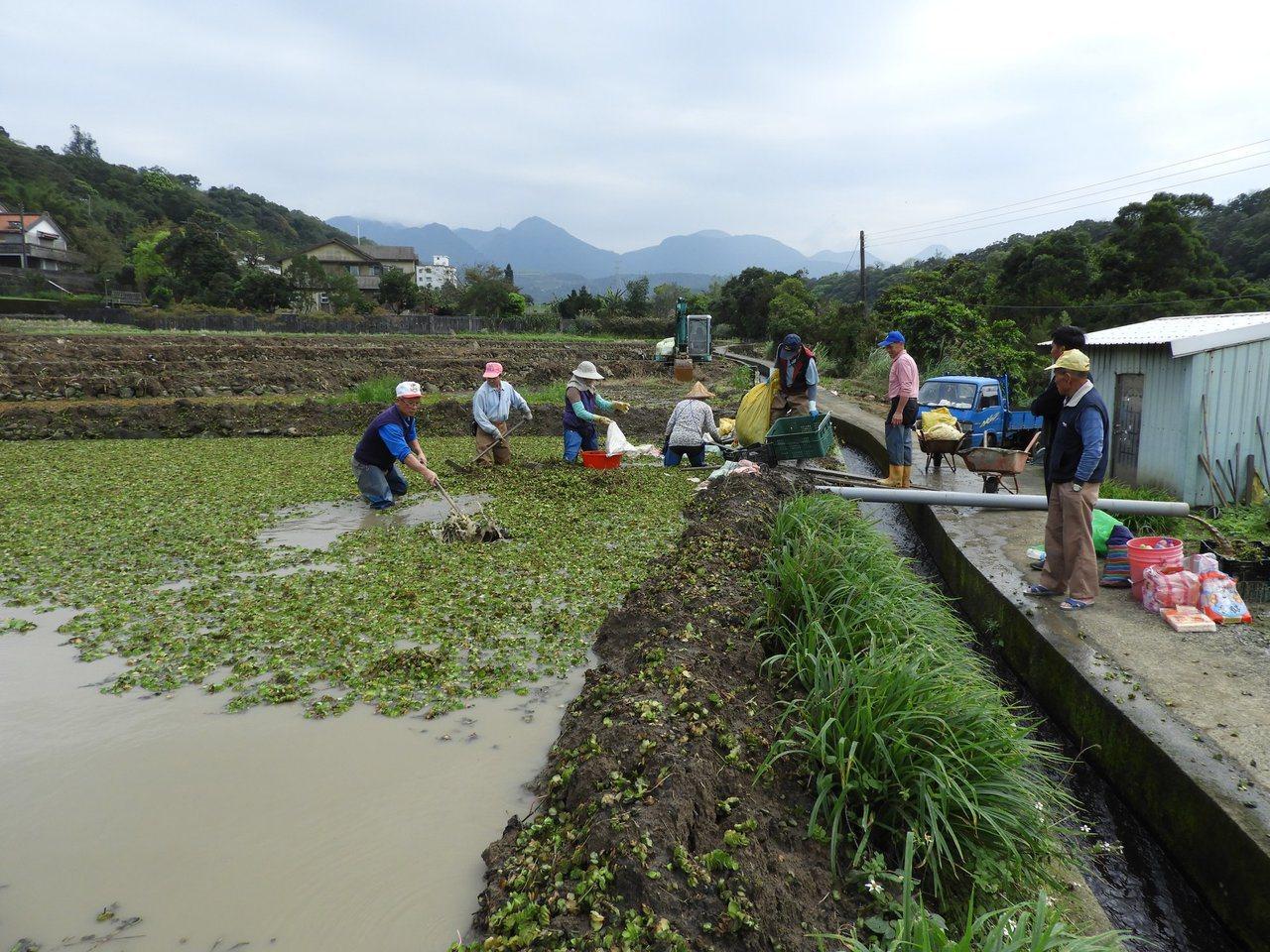社區農友共同維護農田生態。圖/新北市農業局提供