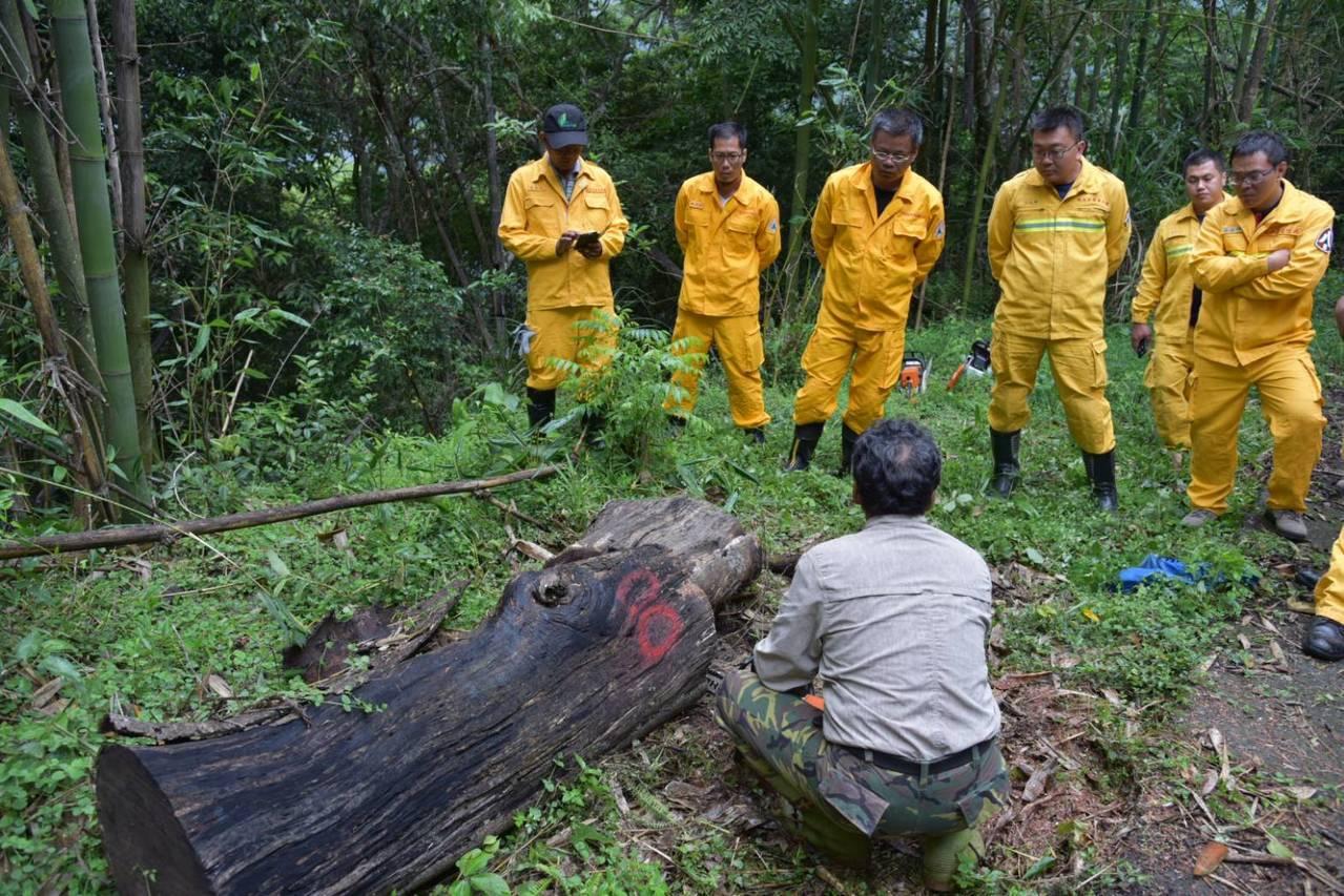 南投林管處請退休的林場員工重出江湖,教導森林救火隊員操作鏈鋸和枯立木移除,降低森...