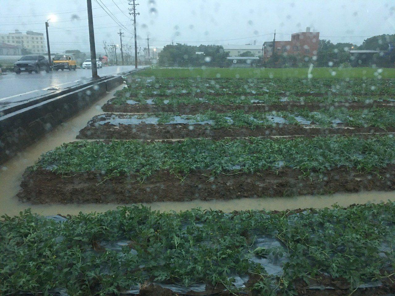 受豪雨影響,桃園市政府農業局初步統計桃園淹水農損達77.65公頃,又以西瓜、洋香...