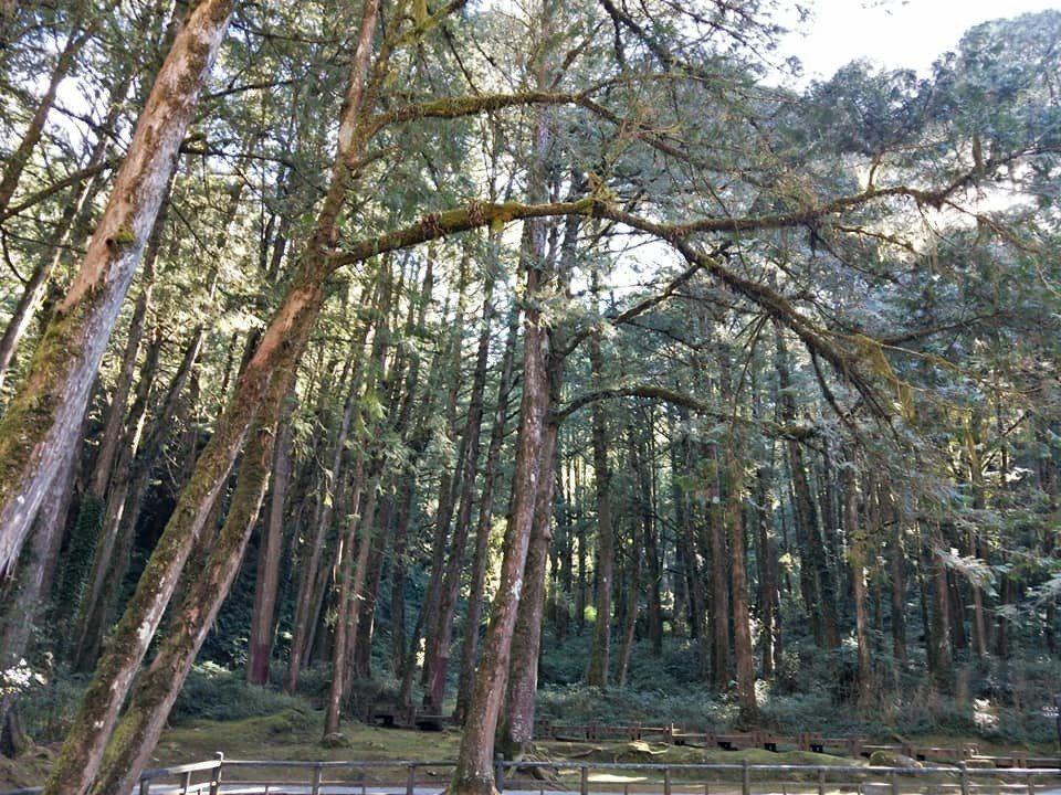 森林療癒有著神奇力量。圖/嘉義林管處提供