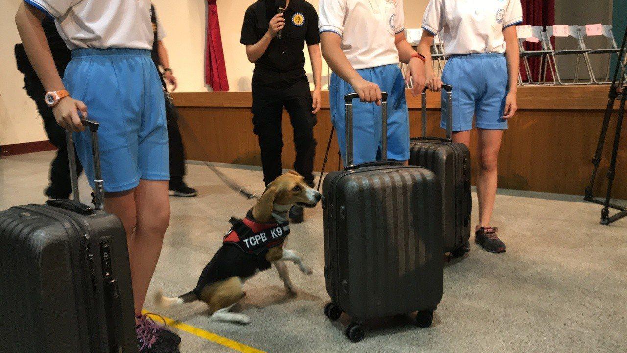 台中市警察局警犬隊警犬訓練有素,現場立即查緝出藏有毒品的行李箱。記者林佩均/攝影