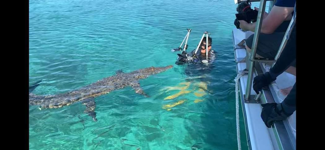 吳永森拍攝鱷魚。圖/彈頭提供
