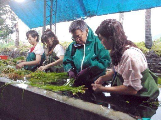 台北市長柯文哲(右二)今早參訪高雄美濃野蓮產銷班時,著青蛙裝下水清洗野蓮,對於是...