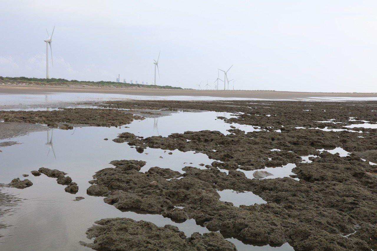 觀塘附近的藻礁生態保育及環保問題,頗受各界關注。 圖/台灣中油提供