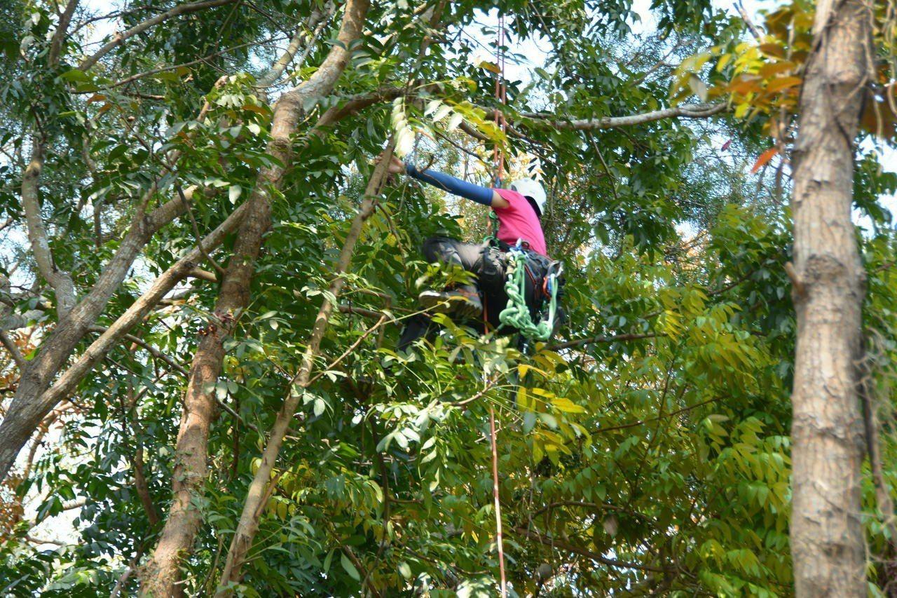 為台灣林業保種,林業採種員的工作辛苦但很重要。記者吳淑玲/攝影