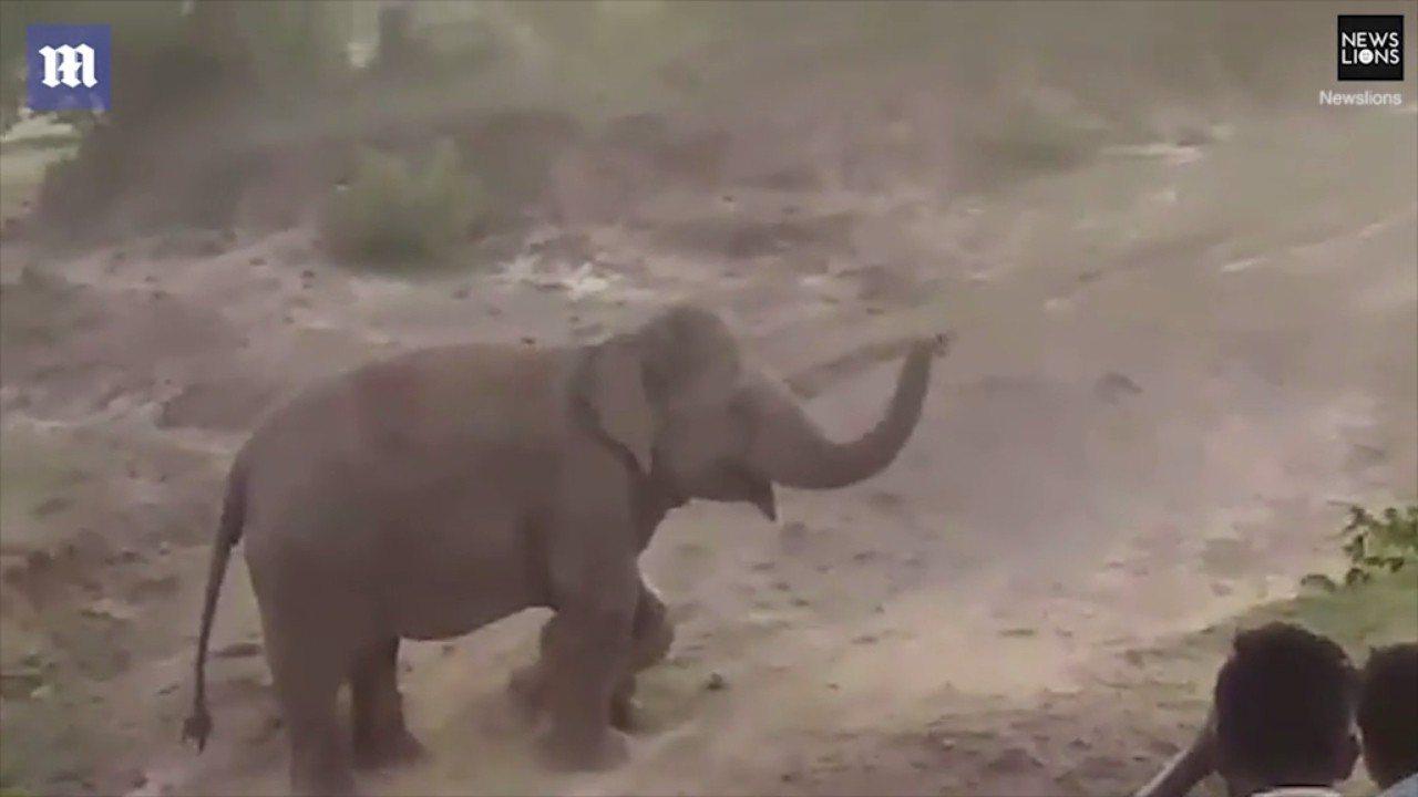 印度西孟加拉邦一小村落,圍觀民眾拿時頭丟擲剛出生的小象,引爆象媽媽怒火,衝撞踩踏...