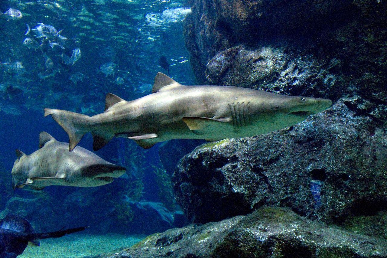 曼谷暹羅百麗宮海洋世界。圖/泰國觀光局提供