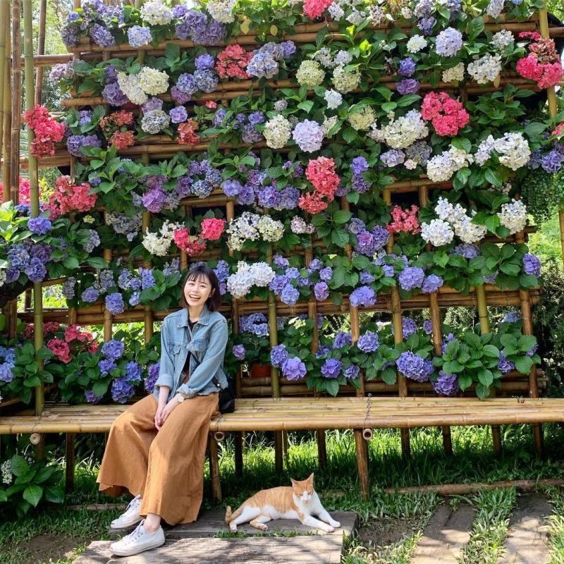 照片由IG網友chengyayu0112提供