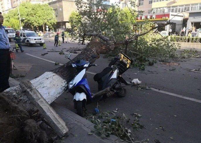 北京19日遭遇強風襲擊,不少路樹甚至因此被吹倒砸中路過人車。(取自北京青年報)