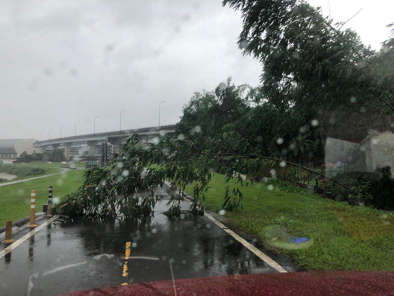 內溝溪往南湖橋腳踏車道有樹木倒塌,目前也已排除。圖/防汛志工汐止分隊提供