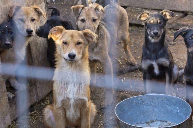等待餵食的狗。(騰訊)
