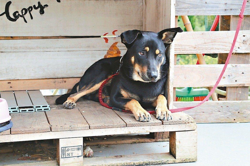 溪山國小的校狗Free,10天大時就送到校園,很快成為學童玩伴。 圖/溪山國小提...