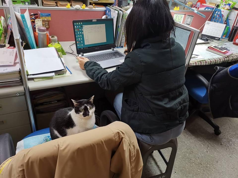 輔導老師把舒適的辦公椅讓給木吉坐,自己坐塑膠椅。 圖/取自明志貓貓俱樂部~喵!粉...