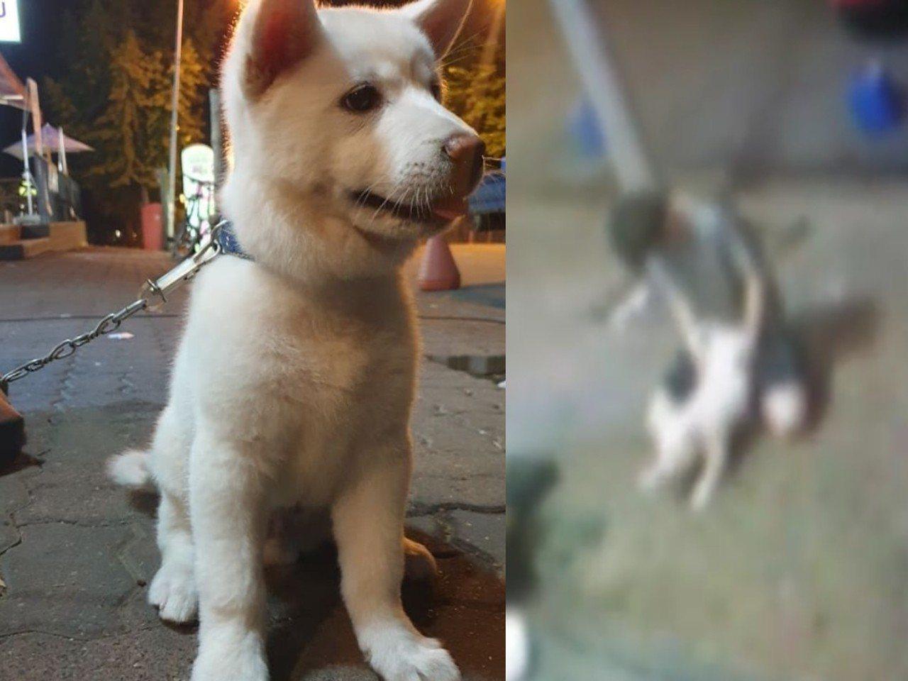 南韓發生一起離譜的「幼犬性侵案」。圖擷自/KAPCA Instagram
