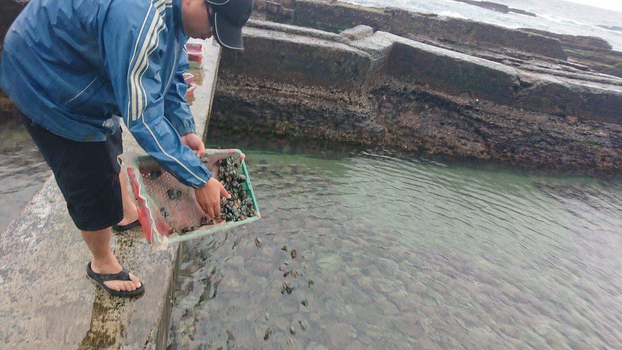 貢寮鮑養殖戶將一籃籃九孔苗均勻的灑入養殖池中。圖/新北市漁管處提供