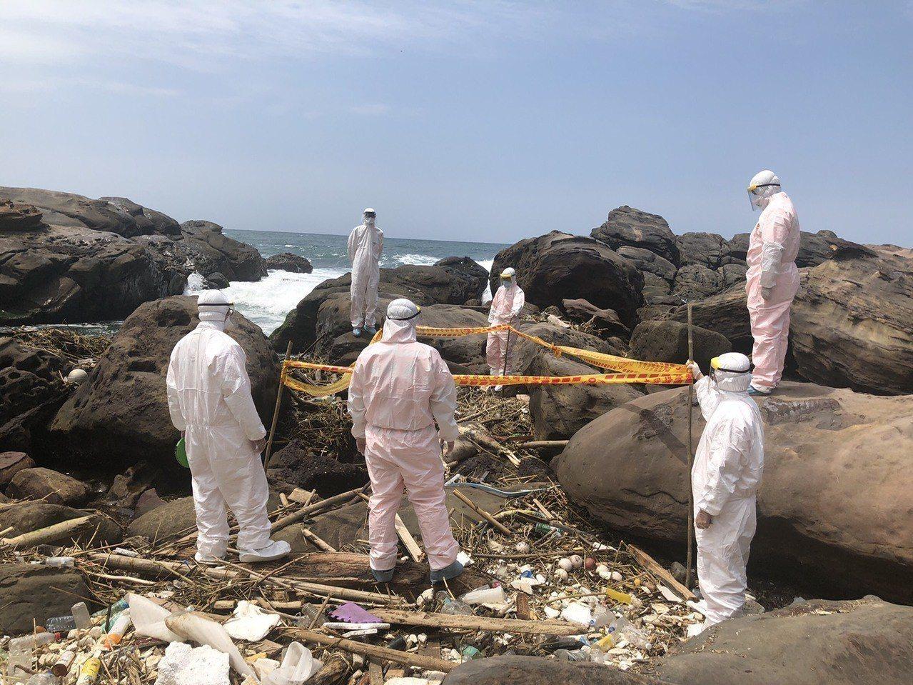 海巡署第2巡防區今天中午接獲民眾通報,東北角南雅奇岩埂海邊有疑似豬屍,安檢所人員...