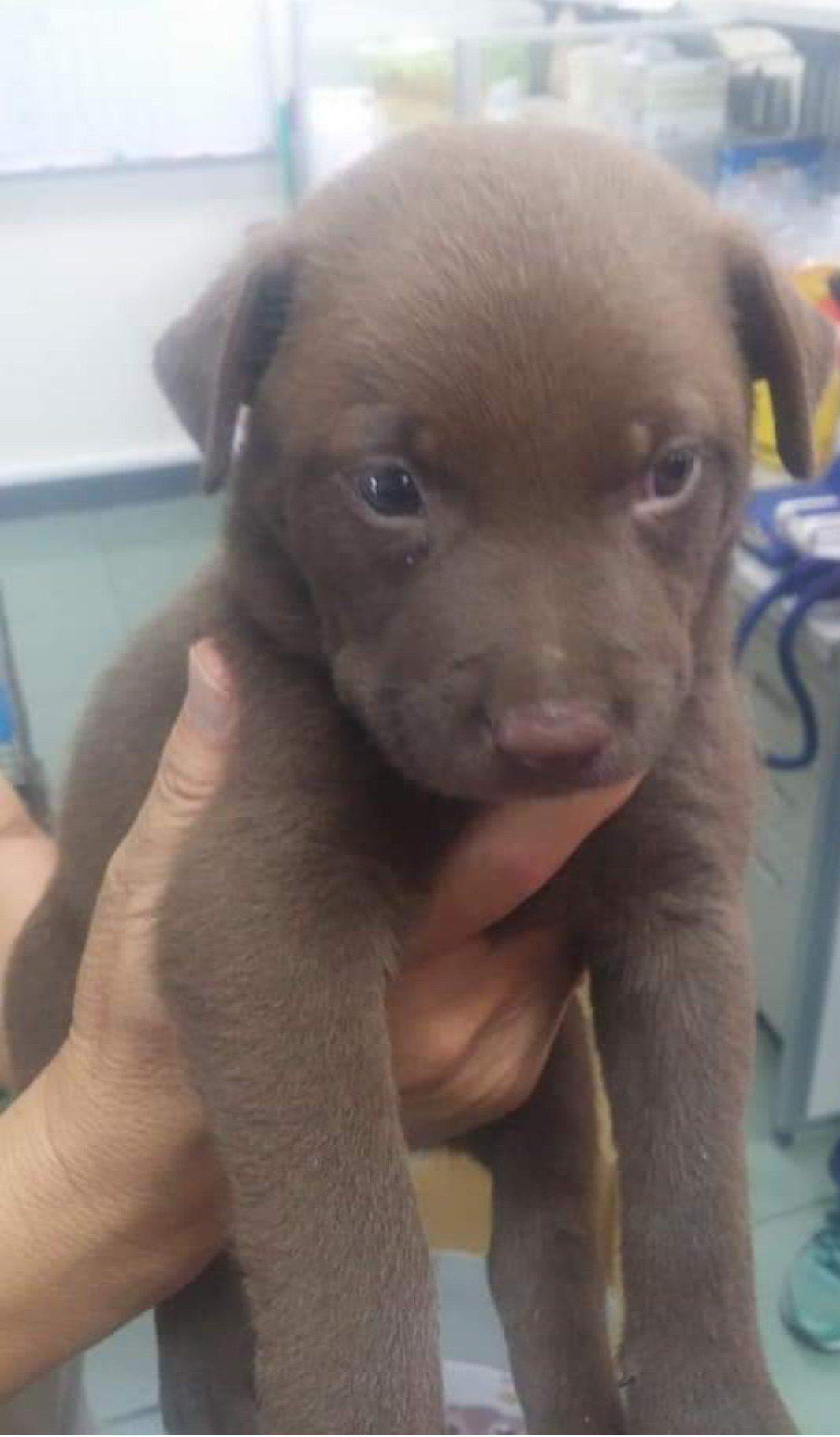 台南學甲流浪狗被捕捉,連剛出生的可愛小狗也不例外。圖/取自網路