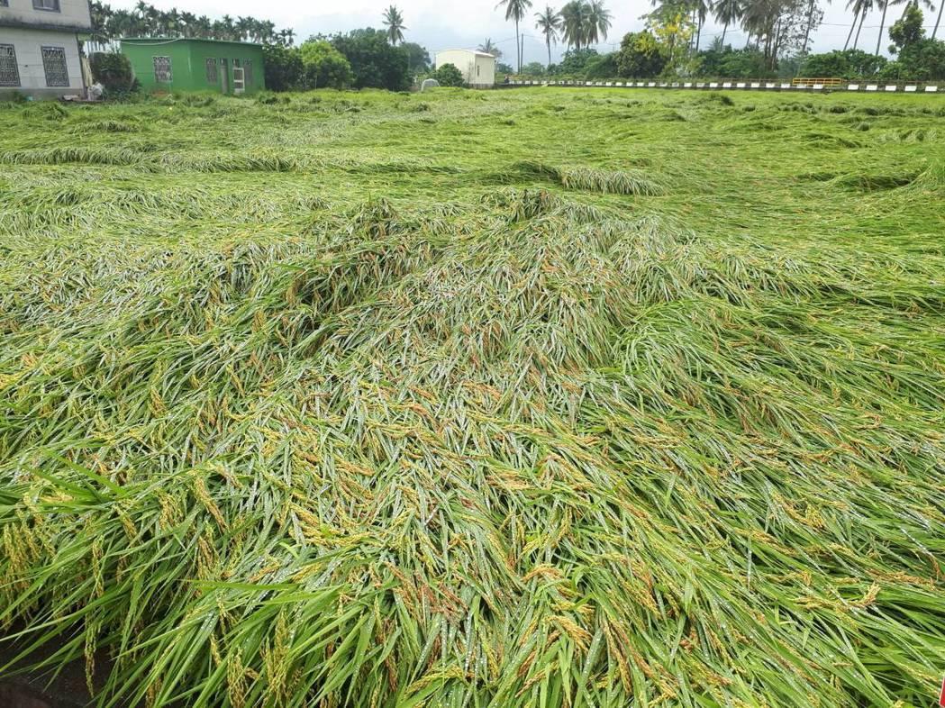 高雄地區豪雨受害農作物為水稻。 圖/高雄市農業局提供